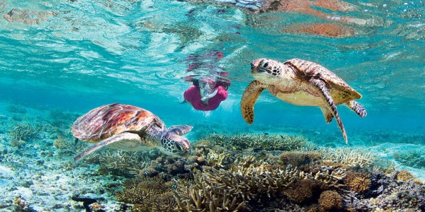 Great Barrier Reef Tour Bookings