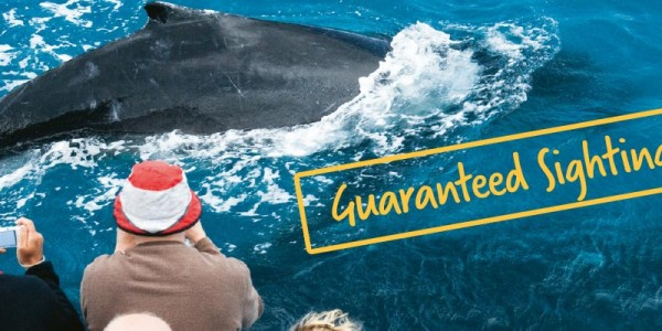 Compare Whale Watch tours